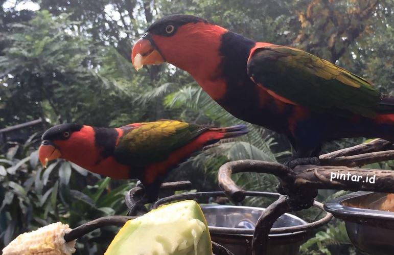 6 Burung Kebun Binatang Gembira Loka wisata.pintar.id